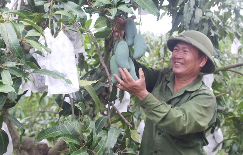 Kết quả, kinh nghiệm trong vận động giáo dân tham gia xây dựng nông thôn mới trên địa bàn huyện Đắk Mil